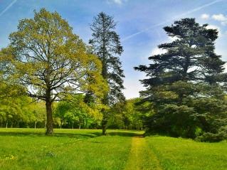 arbres et chemin 5618243506_a69e7279f6_b
