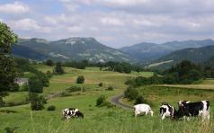 Auvergne IMG_3995